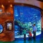 Hackers atacan la red de un casino en Estados Unidos mediante un acuario.